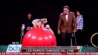 Los Perros famosos del cine ofrecerán un espectacular show en Lima