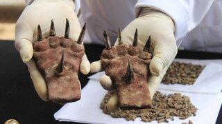 FOTOS: presentan nuevos hallazgos arqueológicos en la Huaca de La Luna