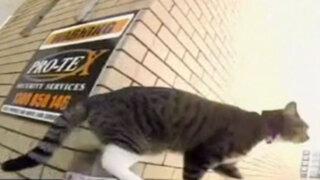 Mundo animal: los simios invaden los cines y los gatos hacen parkour