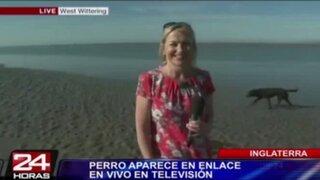 Inglaterra: perro hace sus necesidades durante transmisión en vivo