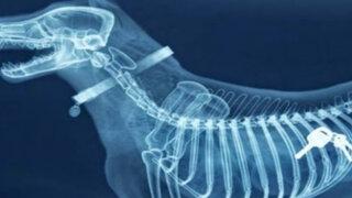 Rayos X aterradores: 21 radiografías que te pondrán los pelos de punta