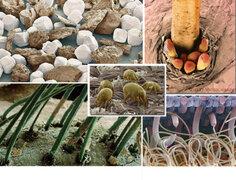 FOTOS: estos 23 objetos vistos a través del microscopio parecen de ciencia-ficción