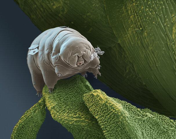 FOTOS: la Tierra quedaría en manos de estas 6 criaturas de suceder el Apocalipsis
