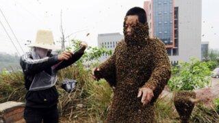 Estados Unidos: hombre muere tras ser atacado por 60 mil abejas