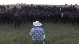 VIDEO: pastor asombra al mundo con curioso método para atraer a su ganado