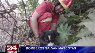 Compañía de Bomberos crearon brigada especial para rescatar animales