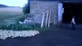 VIDEO: un 'ejército' de patos avanza a las órdenes de un granjero ruso