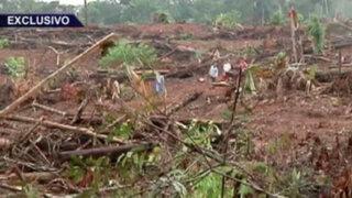 Deforestación sin límites: devastación en los bosques de Iquitos