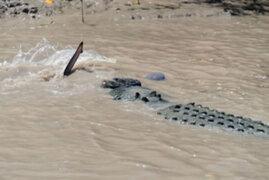 Tiburón vs cocodrilo, ¿quién gana?: las asombrosas fotos de una épica batalla
