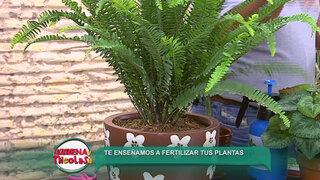 Sepa cómo y con qué fertilizar las plantas de su casa de manera eficaz