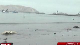 Hallan sin vida a pelícanos y lobos marinos en playa de Chimbote