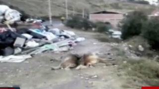 Cusco: aparecen muertos más de 50 perros en parque de Sacsayhuamán