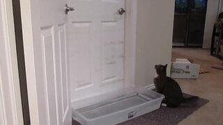VIDEO: Gato tiene asombroso talento para abrir cualquier puerta