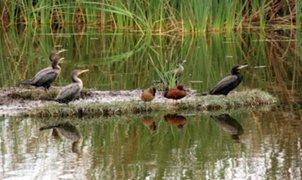 Los Pantanos de Villa: conozca los atractivos de los humedales naturales