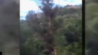 VIDEO: árbol que talaba le cae encima y lo mata