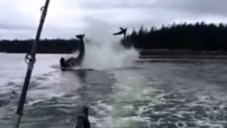 VIDEO: ballena asesina lanza 6 metros en el aire a una foca bebé