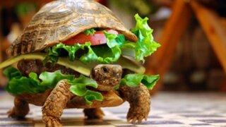 China: hombre intentó pasar su tortuga como una hamburguesa en aeropuerto