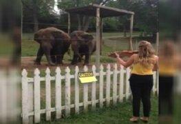 VIDEO: dos elefantes bailan al ritmo del violín en Estados Unidos