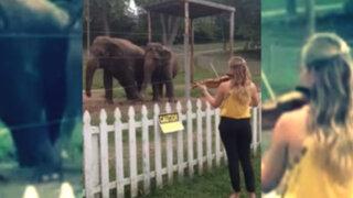 VIDEO: violinista hace bailar a elefantes con la música de Bach