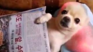 VIDEO: perro asiático recibe un masaje muy estimulante