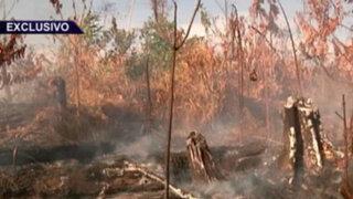 Tala y quema en Ucayali: continúa la devastación de la selva peruana