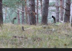 FOTOS: el impactante secreto que se ocultaba en este bosque de Alemania