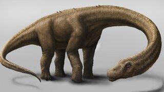 Argentina: descubren al dinosaurio terrestre más grande que existió en el mundo