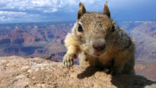 El más buscado: PETA aumenta recompensa por el 'asesino' de una ardilla