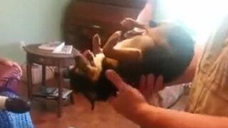 VIDEO: chihuahua se hace al muerto ccon las personas que no le caen bien