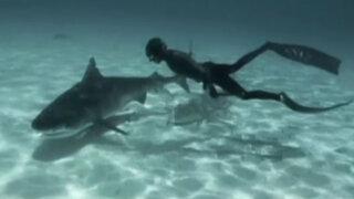 VIDEO: pareja de buzos nada junto a tiburones en Las Bahamas