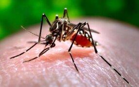 Declaran epidemia de chikungunya en Bolivia tras aumento de casos