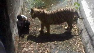 Impactantes imágenes: tigre blanco mata a un hombre en zoológico de la India