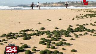 Apariciones de extrañas esferas en playas causan controversia en Australia