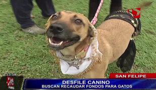 Realizan curioso desfile de modas canino para ayudar a gatos en San Felipe
