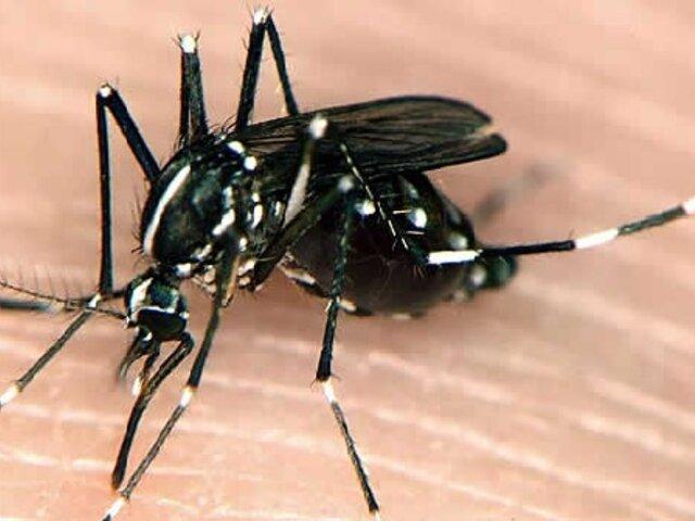 Reportan primer caso autóctono de chikungunya en Madre de Dios