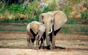 FOTOS: increíbles imágenes de mamás animales con sus bebés