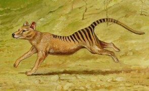 FOTOS: los 15 animales que se extinguieron en los últimos 250 años
