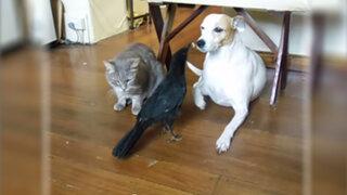 Ave rescatada sorprende a dueños por alimentar a un perro y gato