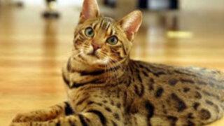 ¿Sabes hace cuanto tiempo que los gatos se hicieron domésticos?