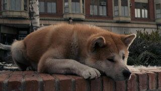 """""""¿Qué hice mal?"""": la conmovedora carta de un perro a quienes lo abandonaron"""