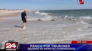 Tiburones causaron pánico en playa de EEUU al nadar en orilla del mar