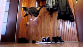 Las travesuras de esta pequeña gata son sensación en las redes sociales