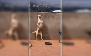 VIDEO: el perro que baila música caribeña es sensación en las redes sociales