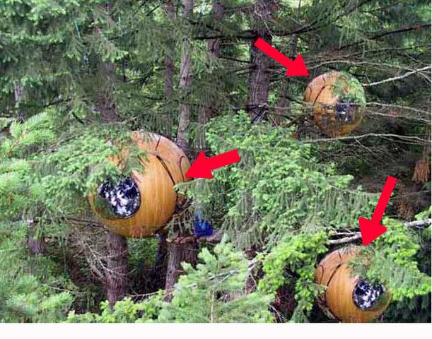 FOTOS: ¿Qué esconden por dentro estas insólitas esferas en medio del bosque?