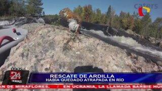 Hombre que practicaba deporte en un río, dejó todo para rescatar a una ardilla