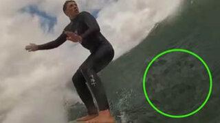 VIDEO: estaban surfeando cuando de repente esto salió de abajo del mar y los detuvo