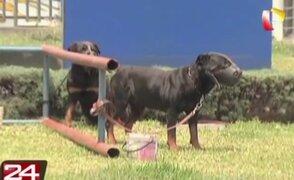 Carmen de la Legua: brigada canina de Serenazgo se encuentra en abandono