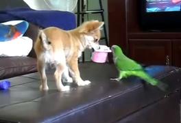 YouTube: la pugna de un perro y un loro por delicioso sabor de un yogurt