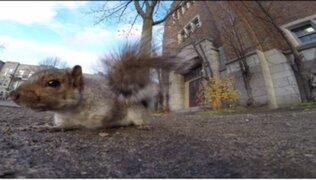 VIDEO: ardilla roba una cámara GoPro y se la lleva a su árbol