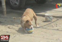 Trujillo: Dueño ata a su perro a poste y lo mantiene en estado de abandono